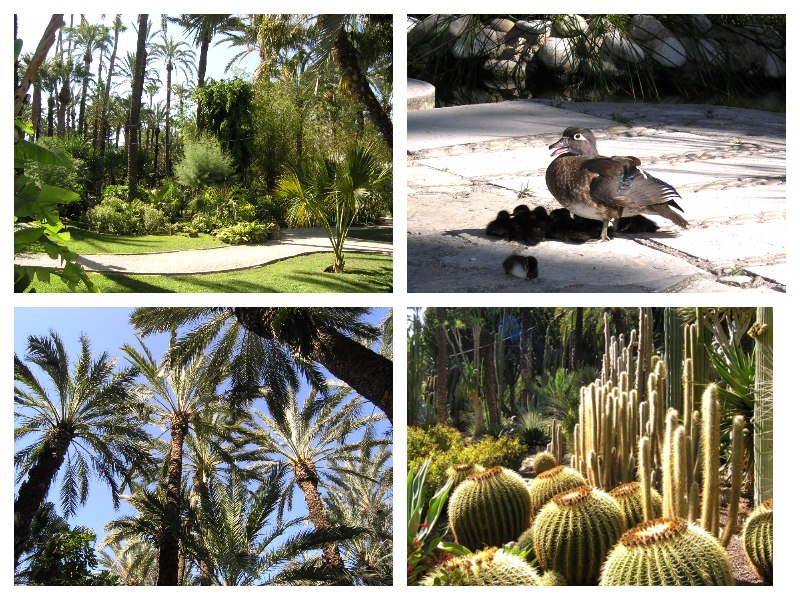 Сад «HUERTO DEL CURA»